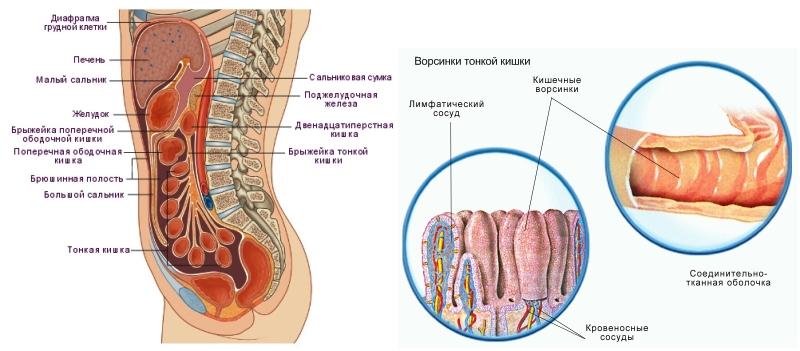 очищение толстого кишечника фортрансом